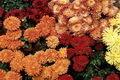 Őszi virágzásúak kép