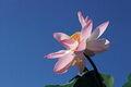 Tavaszi virágzású kép