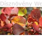 Cserszömörce őszi lombszín