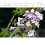 Viráglonc virág