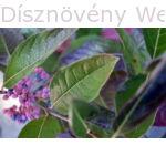 Pink Beauty bangita levelek, termés