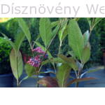 Pink Beauty bangita levelek termés