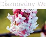Kikeleti bangita virág