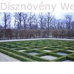 Sövénybukszus kastélyparkban