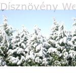 Leylandi ciprus tél