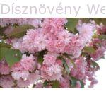 Kanzan díszcseresznye virág, levél