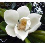 D.D. Blanchard örökzöld liliomfa virág