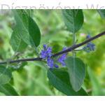 Angol kékszakáll virág és levél