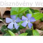 Kis télizöld meténg virágok