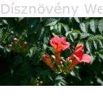 Trombitafolyondár virágok, levelek