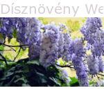 Lilaakác virágzó ág