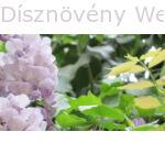 Lilaakác csendélet, virággal