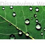 © Díszkertgondozási tanácsok a 12. héten