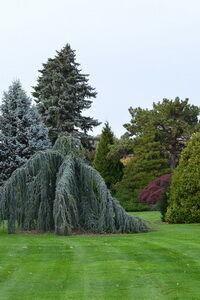Északi díszkert kép
