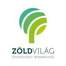 Télizöld vagy széleslevelű fagyal / Ligustrum ovalifolium - 30-40