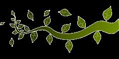 Dísznövény-szakértő kép