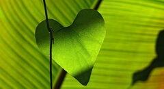 Zöldlevél, zöld szívvel kép