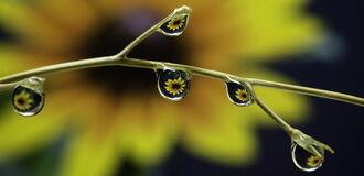 Dísznövény kép