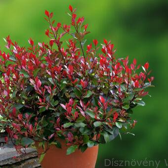 Little Red Robin Klberkenye Konténerben