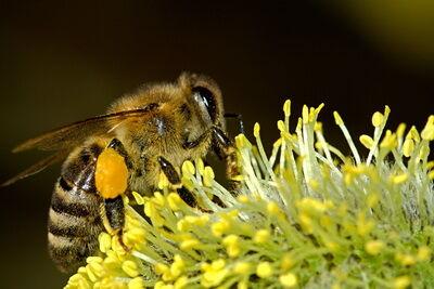 Méh munkában kép