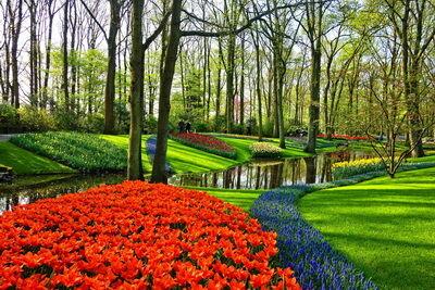 Holland parkkép