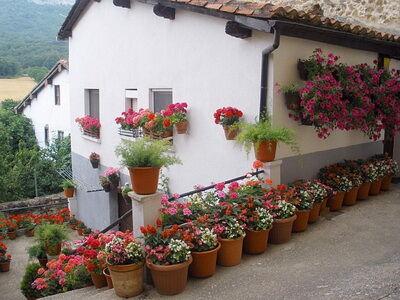 Edényes növények Spanyolországban kép