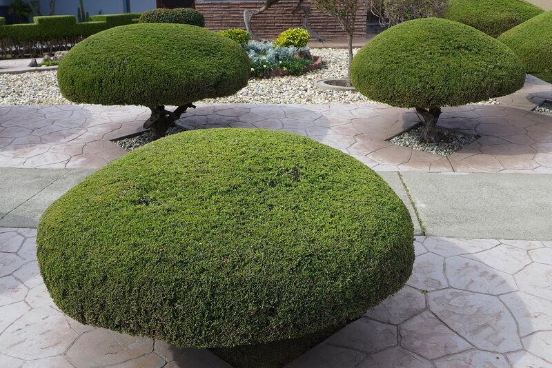 Topiary fák kép
