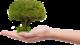 Ingyenes ültetés ikon