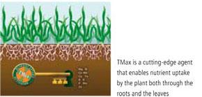 TMax kép